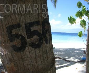 Jeder Palme ihre Nummer. Foto: cku