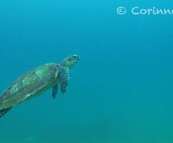 Schildkröte. Foto:cku