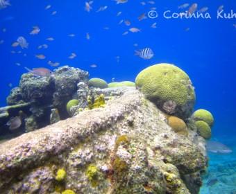 Tug Boat, Mini-Wrack in schnorcheltauglicher Tiefe vor Curacao. Foto: cku