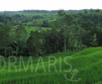 Die Reisterrassen von Jatiluwih gehörten zum Weltkulturerbe. Foto: cku