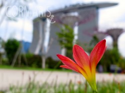 Marina Bay Sands. Foto: cku