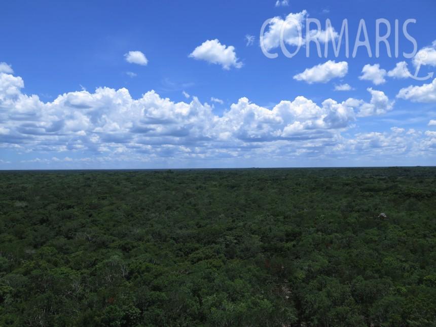 Blick von den Maya-Pyramiden von Coba. Foto: cku