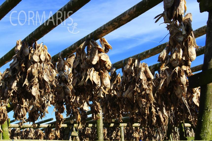 Stockfisch-Trockenstation. Foto: cku