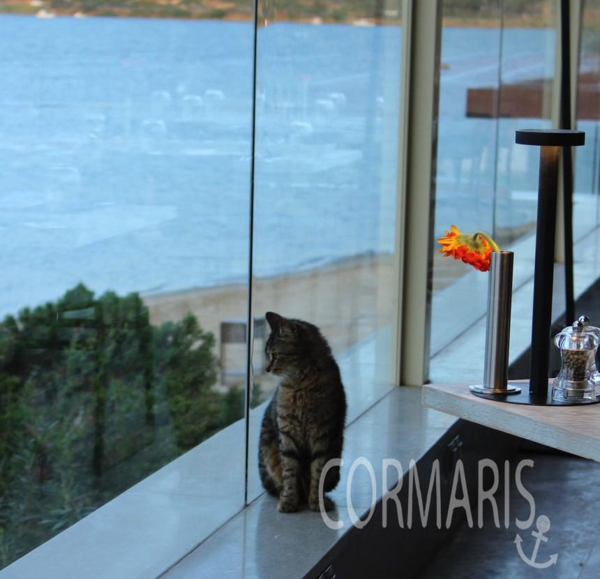 Frühstück mit Aussicht. Und Katze Ticker. Foto: cku