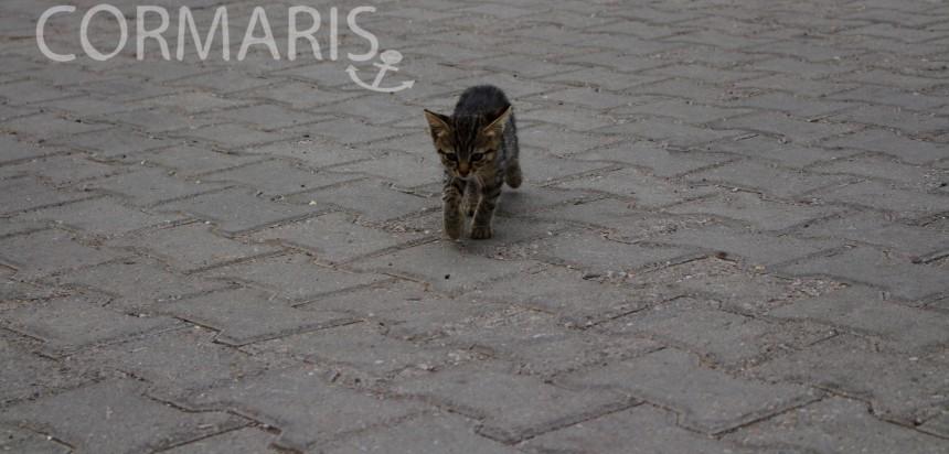 Katzenbabys. Ernsthaft. Foto: cku