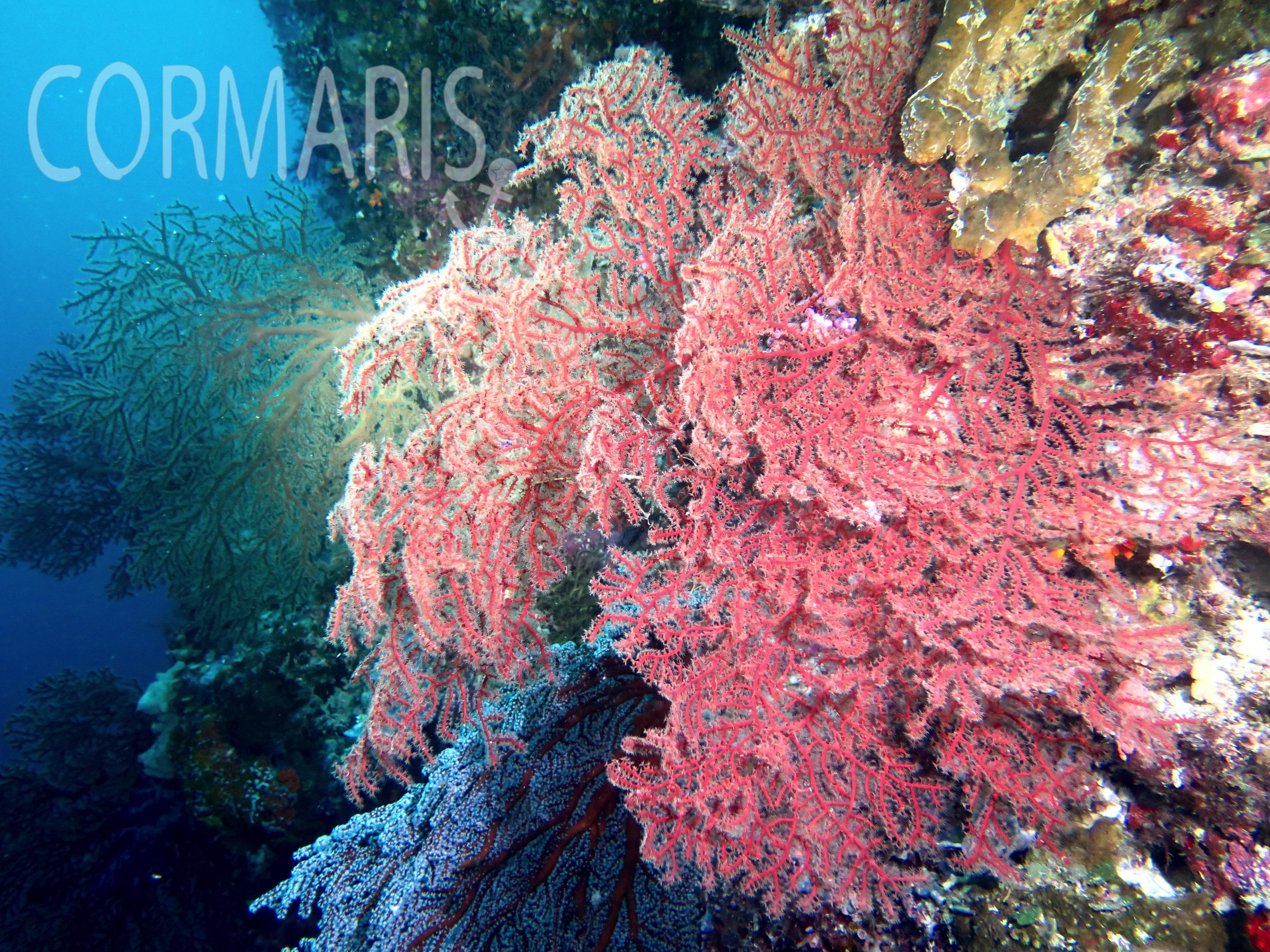 Ein vertikaler Unterwassergarten. Schlecht fotografiert, dafür in echt wunderschön. Foto: cku