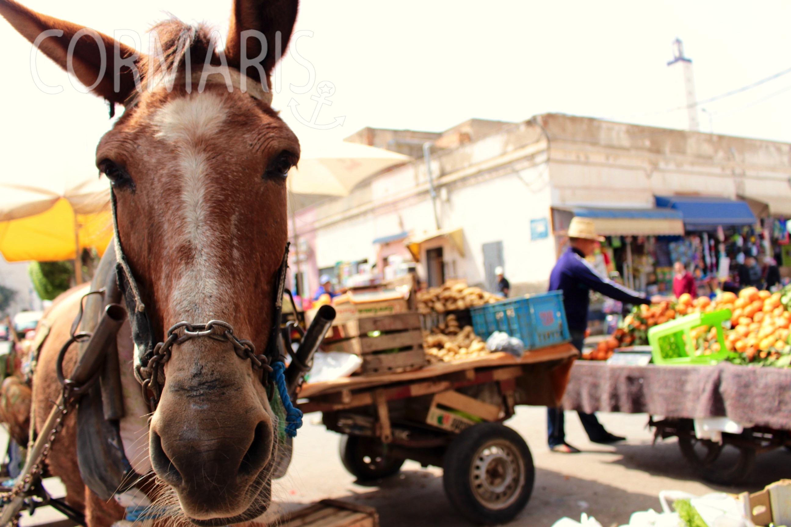 Ein Pferd zieht die Karre eines Obst- und Gemüsehändlers durch die Straßen von Nador. Foto: Corinna Kuhs